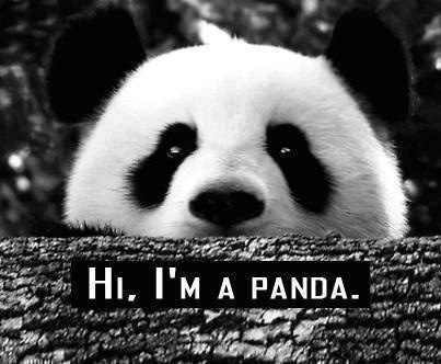 Pandas Are So Cool Because…